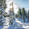 Amazing Landscape With Frozen Snow-covered Trees In Winter Morning  by Oleg Yermolov