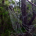 Australia - Uniquely Yours Spider Web by Jeffrey Shaw