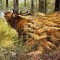 nature Rien Poortvliet by Eloisa Mannion