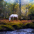 New Forest - England by Joana Kruse