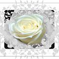 Wedding Rose Collection  by Debra     Vatalaro