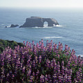 2a6101 Arched Rock And Blue Pod Lupine Ca by Ed Cooper Photography