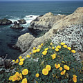 2a6107 Poppies On The California Coast by Ed Cooper Photography