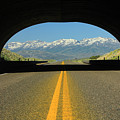 2d11130 Animal Overpass In Nevada 2 by Ed Cooper Photography