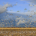 A Panoramic Of Thousands Of Migrating by Panoramic Images