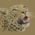 African Leopard 2 by Larry Linton
