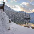 Alpine Winter Reflections by Ian Middleton