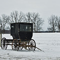 Amish Buggy Near Shipshe by David Arment