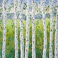 Aspen Trees Colorado by Frederic Payet