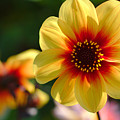Autumn Flowers by Jeremy Hayden