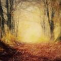 Autumn Forest by Michal Bednarek