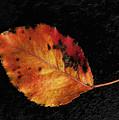 Autumn Leaf by Alexander Fedin