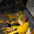 Autumn Leaves by Svetlana Sewell