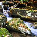 Autumn Mountain Stream by Thomas R Fletcher