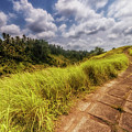 Bali Landscape by Jijo George
