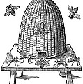 Beehive by Granger