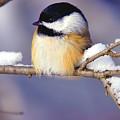 Bird by Bert Mailer