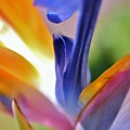 3 Bird Of Paradise Macro by Linda Brody