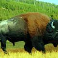 Bison by Nadezhda Zhuravleva