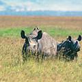Black Rhinocerous by Buddy Mays