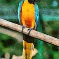 Blue And Gold Macaw by George Atsametakis