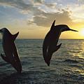 Bottlenose Dolphin Tursiops Truncatus by Konrad Wothe