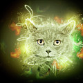 British Shorthair Cat by Humourous Quotes