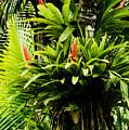 Bromeliads El Yunque National Forest by Thomas R Fletcher