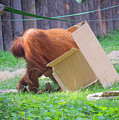 Budapest Zoo by Milena Boeva