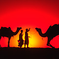 Camels At Sunset by Michele Burgess