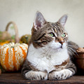Cat And Pumpkins by Nailia Schwarz