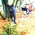 3 Cat Attack by Mina Milad