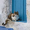 Cat In A Doorway, Greece by Jean-Louis Klein & Marie-Luce Hubert