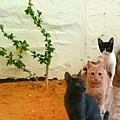 3 Cats by Mina Milad