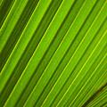 Coconut Palm Leaf by Dana Edmunds - Printscapes