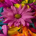 Daisies Petals by Jim Corwin