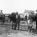 3 Desert Prospectors C. 1900 by Daniel Hagerman
