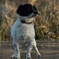 Dog  by Janina Cibulskiene