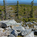 Dolly Sods Wilderness by Thomas R Fletcher
