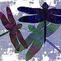 3 Dragonfly by Jack Zulli