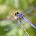 Dragonfly by Mike Dickie