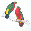 Ed Lear The Parrots by Sue Rosen