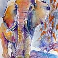Elephant by Kovacs Anna Brigitta