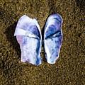 Fallen Butterfly by Angus Hooper Iii