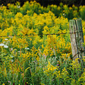 Fence Post by Michael Peychich