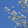 Flowering Trees by Michael Munster