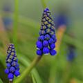 Flowers  by Tino Lehmann