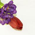 Freesia And Tulip by Elvira Ladocki