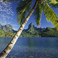 French Polynesia, Moorea by Ron Dahlquist - Printscapes