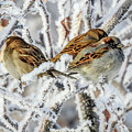 3 Frosty Friends by Kay Hodges
